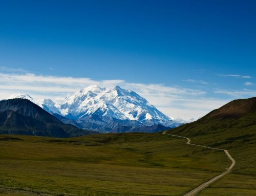 Mount Denali National Park Trail Log