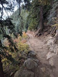 North Kaibab Trail Conifers
